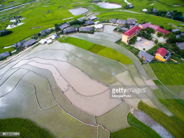 Terraced rice field in water season in Mu Cang Chai from above