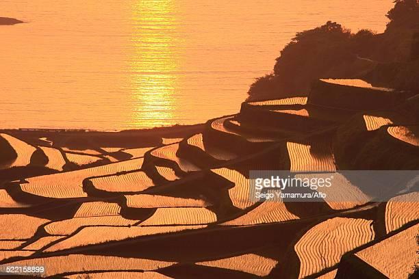 Terraced Rice Field, Japan