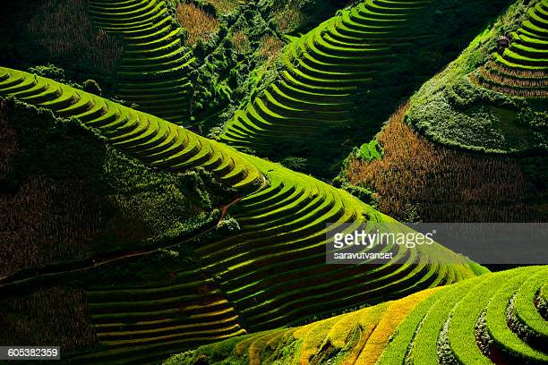 Terraced rice field, Yen Bai, Vietnam