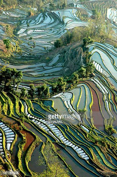 Terraced rice fields in Yuangyuang