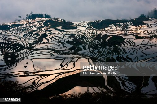 Terraced rice fields, Yuanyang, China : ストックフォト