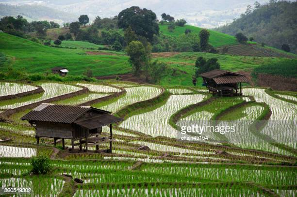 Terraced Rice Paddy Field in Chiangmai, Thailand
