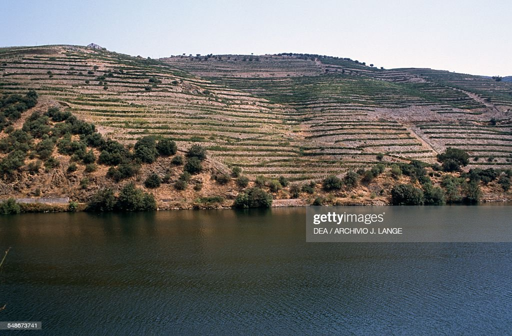 Terraced vineyards along the course of the Douro river Douro valley Douro valley Portugal