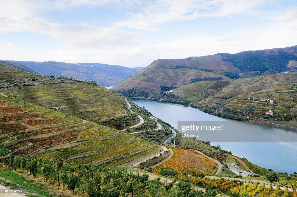 Terraced vineyards in autumn