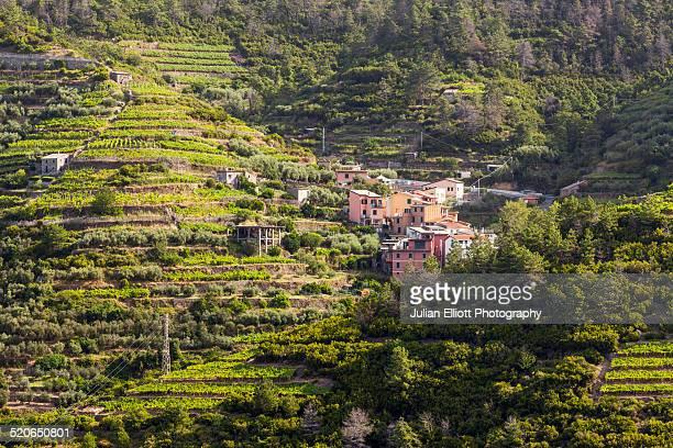 Terraced vineyards in Cinque Terre, Italy
