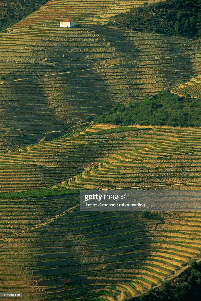 Terraced vineyards near Pinhao, Douro Valley, Portugal, Europe