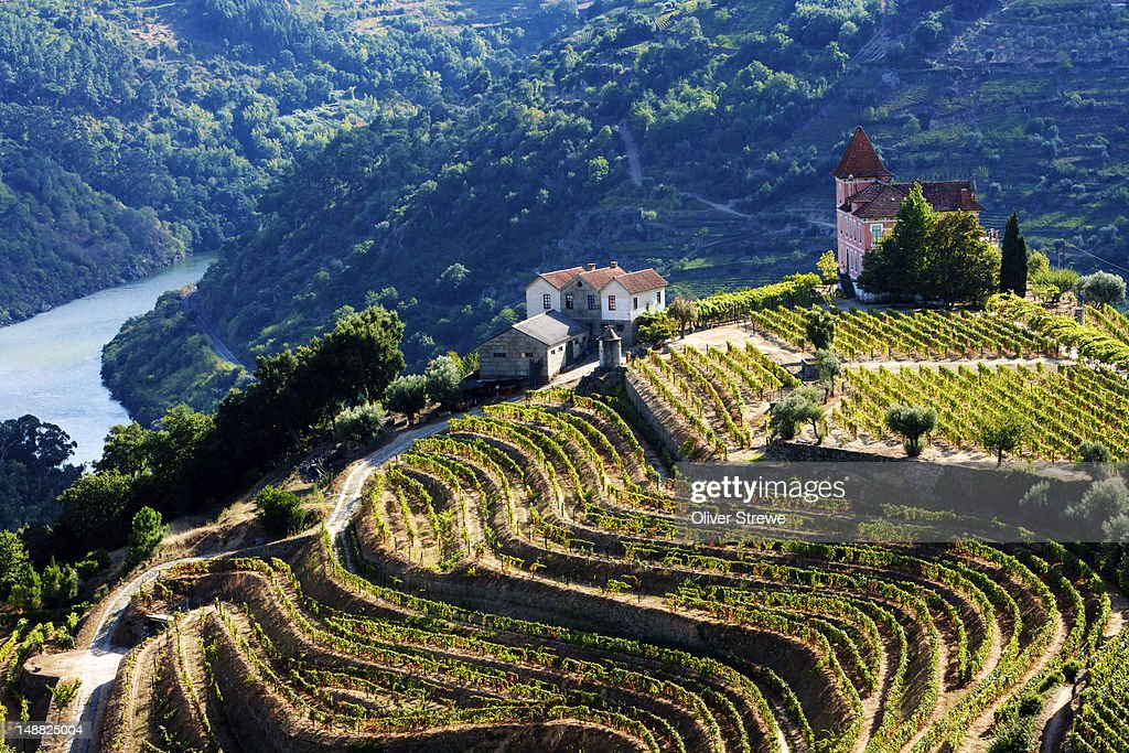 Terraced vineyards of Douro River Valley.