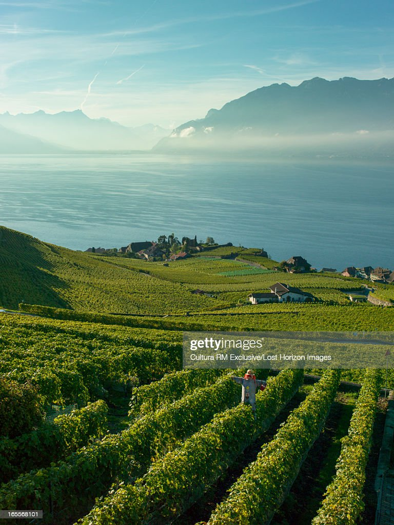 Terraced vineyards on rural hillside