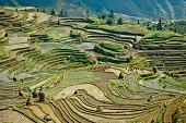 Terraced Winter Rice Fields
