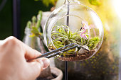 Terrarium garden scene in glass ball shape with Tillandsia, pebbles and flamingo toy inside and stainless forceps to decorate