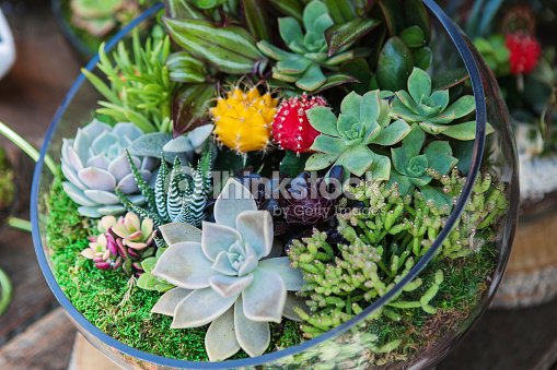 terrarium avec cactus plante grasse photo thinkstock. Black Bedroom Furniture Sets. Home Design Ideas