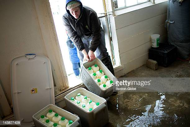 Terri Lawton pulls a crate of milk out of the milk house at Oake Knoll Ayrshires in Foxborough Mass on Saturday March 1 2008 Lawton is a licensed raw...
