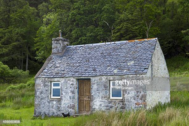 Terrier by traditional humble Scottish fisherman's cottage at Kilmalieu on the shores of Loch Linnhe Western Highlands of Scotland
