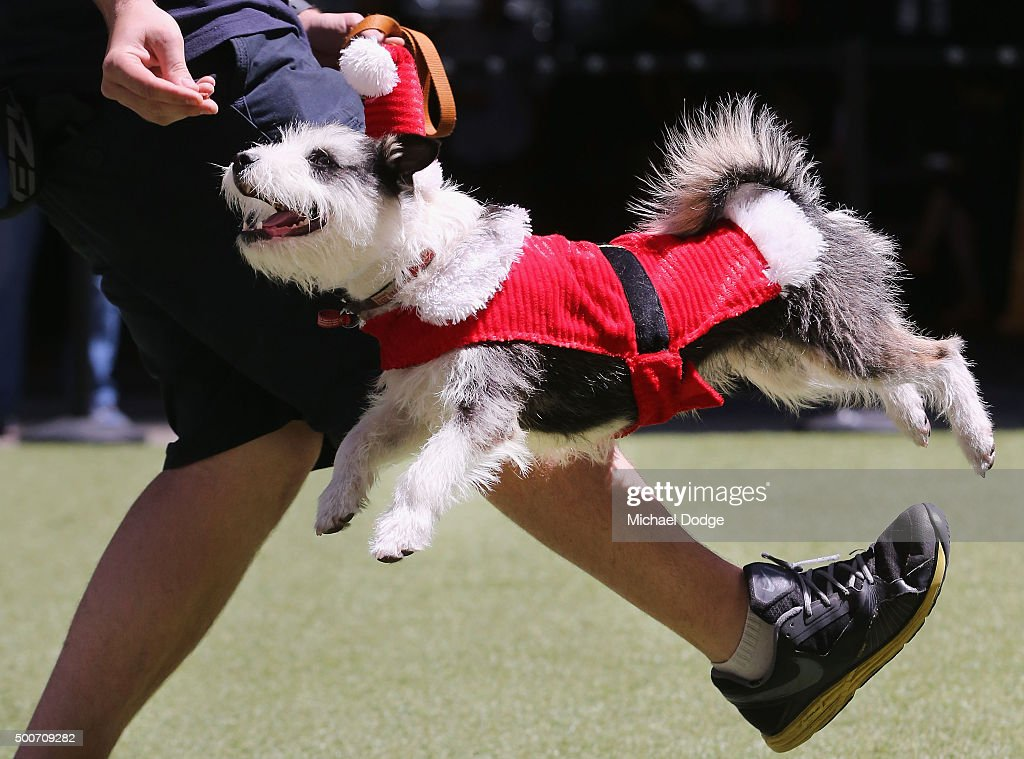 Dog jumps for food at qv square during the festive best dressed dog