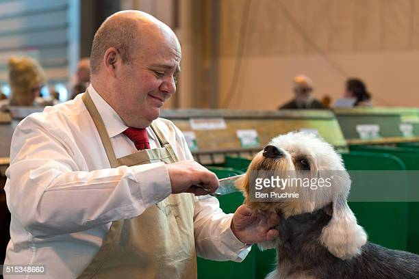 Terrier is groomed by its owner on the final day of Crufts 2016 on March 13 2016 in Birmingham England First held in 1891 Crufts is said to be the...