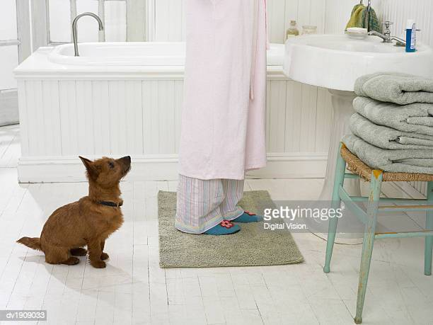 Terrier Sits in a Bathroom Waiting Patiently By a Woman's Feet