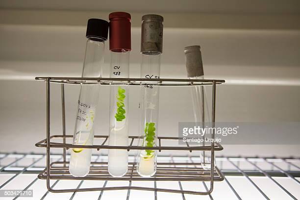 Test tubes rack with micro algae