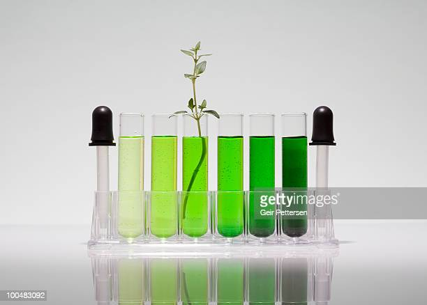 Test tubes with green liquid, plant shoot