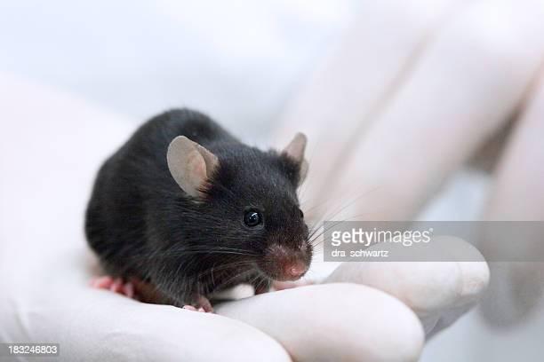 Tests für Tiere