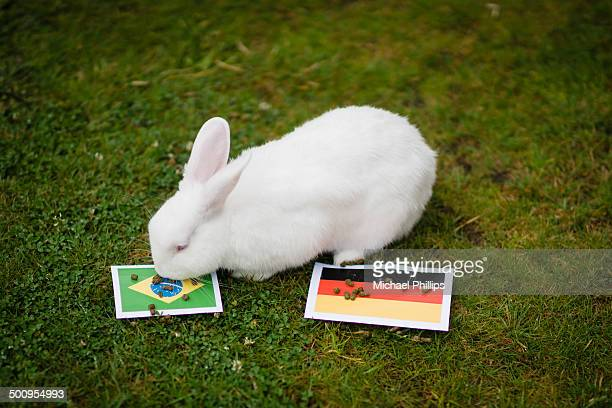 Tetney the Psychic White Rabbit dithered on this one Other pet psychics may be muddying the River of Time In the end though it looks like the home...