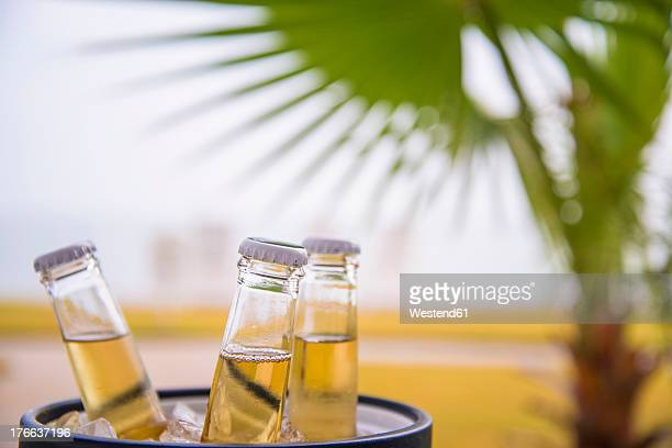 USA, Texas, Beer bottles in ice bucket in front of palm tree leaf