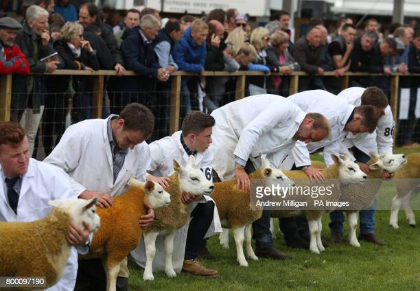Texel sheep in the show ring during the Royal Highland Show in Edinburgh