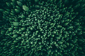 A forest from above, landscape view