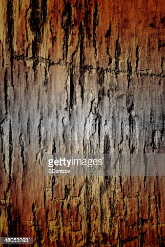 texture of the old damaged pine wood : Stockfoto