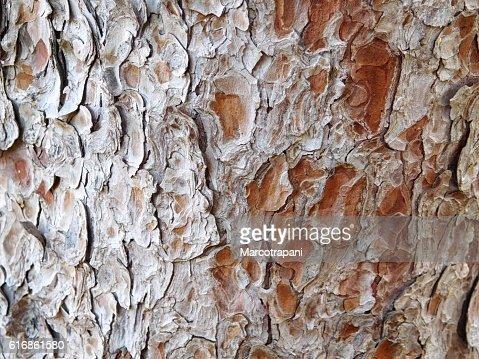 texture of tree trunk : Stock Photo