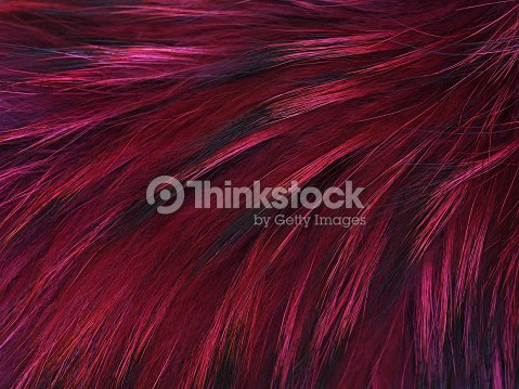 Texture raccoon fur dyed in pink and black, hair of a dyed raccoon. Natural soft furry  fur background for fur design : Stock Photo