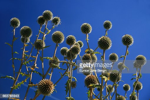 Texture Series: Spiky