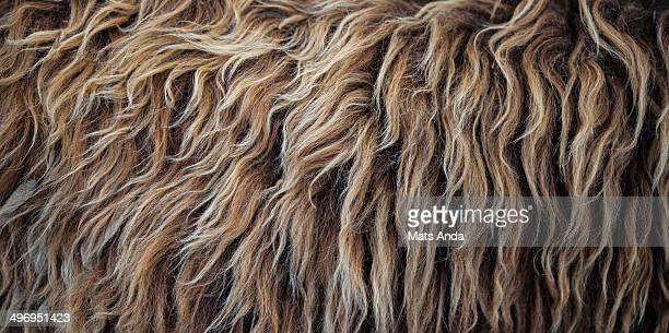 Texture sheep