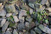 Stone walls built in the old way, plants growing in the gaps