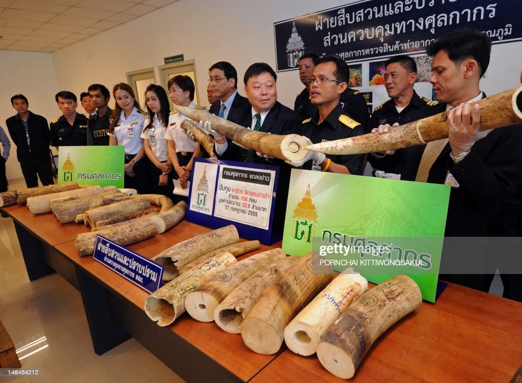 Thai customs officials show confiscated elephant tusks during a press conference at the customs office of Suvarnabhumi airport in Bangkok on July 17...