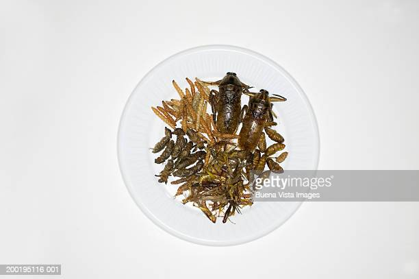 Thai dish with insects, overhead view