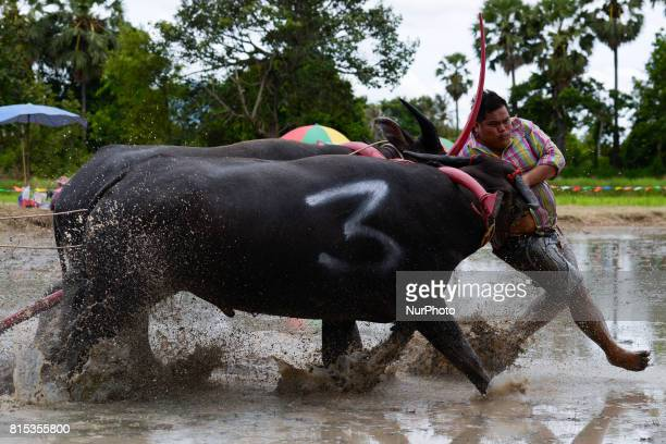 A Thai farmer catches his buffalos during the Water Buffalo Racing Festival in Chonburi province Thailand 16 July 2017