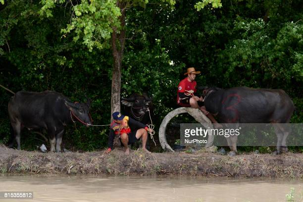 A Thai farmer competes in the Water Buffalo Racing Festival in Chonburi province Thailand 16 July 2017
