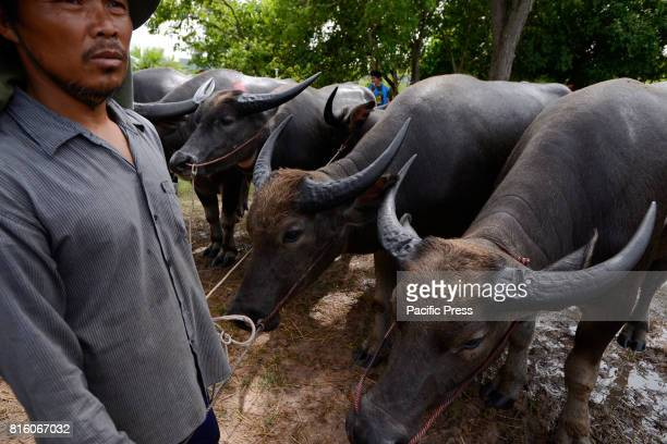 Thai farmer participates in the annual Water Buffalo Racing Festival The annual Water Buffalo Racing Festival is a cultural heritage event initiated...