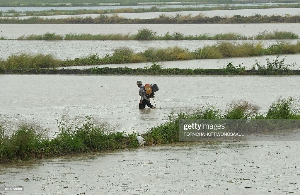 Thai farmer walks through a flooded rice field in Ayutthaya province, north of Bangkok on October 3, 2013. The Disaster Prevention and Mitigation Department reported that 25 provinces in Thailand are still flooded and 27 people have died idue to the flood.