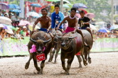 Thai farmers ride on buffaloes during a buffalo racing festival in Thailand's central Chonburi province on October 11 2011 The annual race takes...