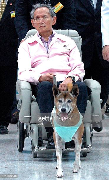 Thai King Bhumibol Adulyadej holds his dog while sitting in a wheelchair at a hospital in Bangkok late on February 2010 Thailand's revered king...