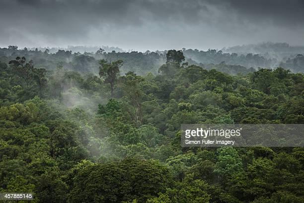 Thai Rainforest
