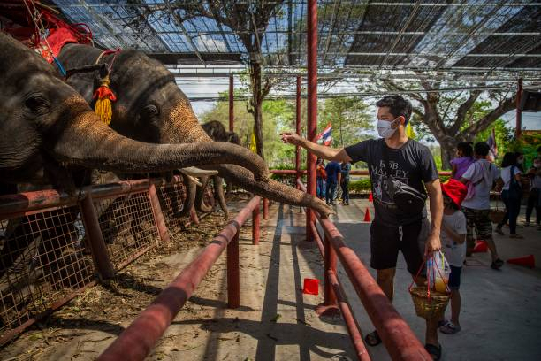 THA: Elephants In Thailand At Risk Amid The Coronavirus Pandemics