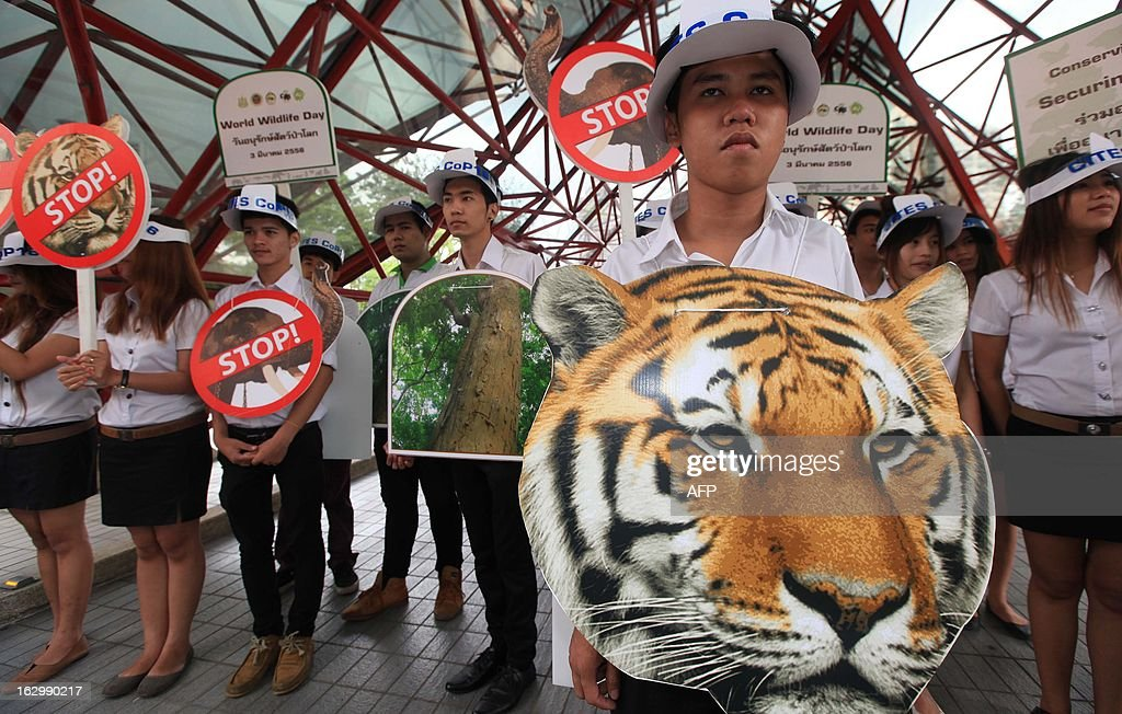 Thai wildlife activists hold placards and pictures of endangered species as they stage a demonstration outside the venue of the Convention on International Trade in Endangered Species (CITES) on its opening day in Bangkok on March 3, 2013. Global conservationists converged on Bangkok on March 3 for the start of endangered species talks, as host Thailand was forced onto the defensive over the rampant smuggling of ivory through its territory. AFP PHOTO/Pairoj