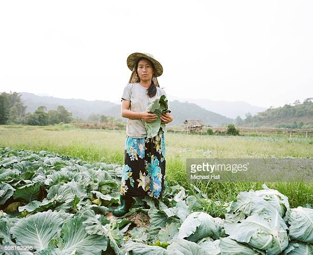 Thai woman harvesting cabbages