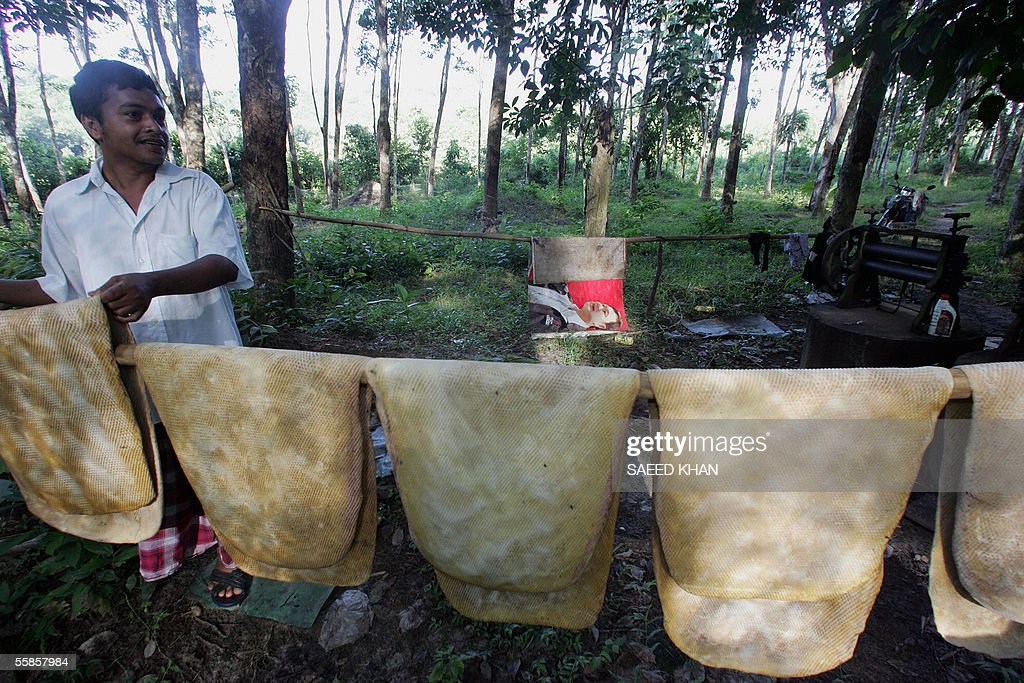 A Thai worker dries rubber sheets in a rubber plantation during the early hours work in Thailand's violence-torn Yala province, 24 September 2005. The violence has claimed more than 960 lives in 21 months, including many Buddhist and Muslim tappers shot or beheaded while working at night, sewing fear among rubber workers in Thailand, the world's biggest producer and exporter of natural rubber. AFP PHOTO/ Saeed KHAN