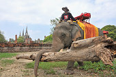 AYUTTHAYA Thailand Photo taken in the city of Ayutthaya central Thailand on Nov 10 shows an elephant and mahout that are part of the cleanup teams...