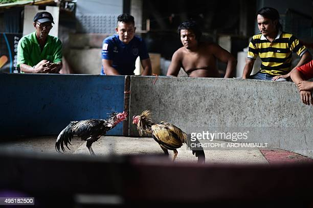 Thailandanimalgamblingculture FEATURE by Preeti Jha Ju Apilaporn This picture taken on October 11 2015 shows men watching as cocks fight on a...