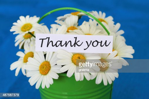 Thank you card with white daisies on blue background : Stock Photo