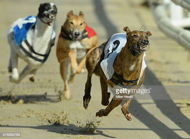That's Rich in action during the second race at the Coral Brighton and Hove Greyhound stadium on February 28 2014 in Brighton England